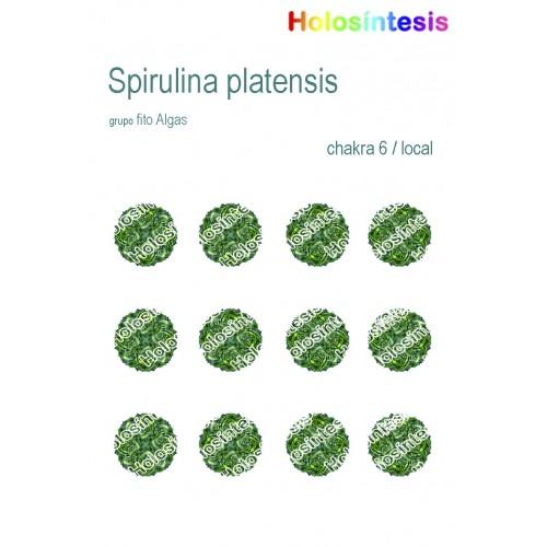 Holopuntos Spirulina platensis