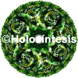 Medallones de resina Aloe vera